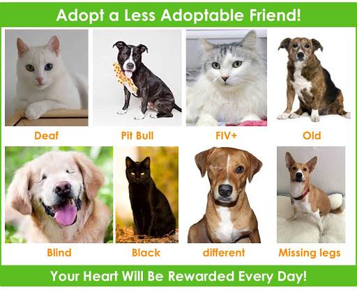 Pets with Disabilities: Overview