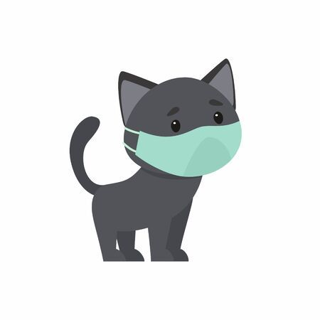 Eight Common Myths about Surgery & Cats