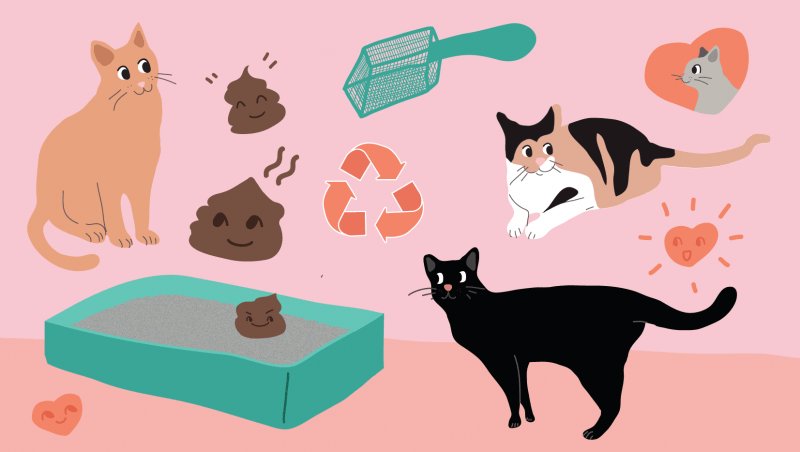 Litterbox 101: Tips, Tricks & Support!