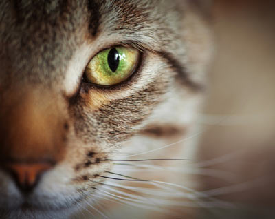 Five Common Cat-Health Myths